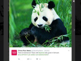 パンダ/China Newsのツイート